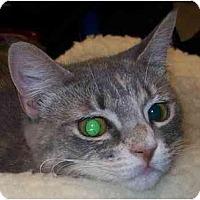 Adopt A Pet :: Bonita - Annapolis, MD