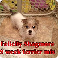 Adopt A Pet :: Felicity Shagmore - Staunton, VA