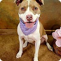 Adopt A Pet :: Lilly - Lapeer, MI