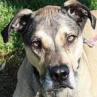 Adopt A Pet :: Bosco - Huntley, IL
