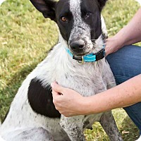 Adopt A Pet :: DELANEY - Fort Worth, TX