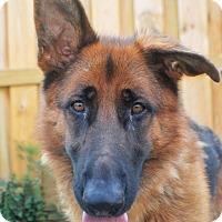Adopt A Pet :: Haagen - Indianapolis, IN