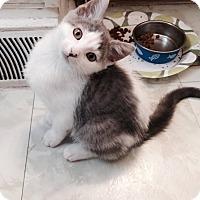 Adopt A Pet :: Elka - Stafford, VA