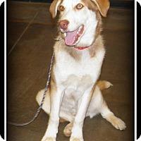 Adopt A Pet :: Leroy - Indian Trail, NC