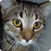 Adopt A Pet :: Arthur - Hamburg, NY