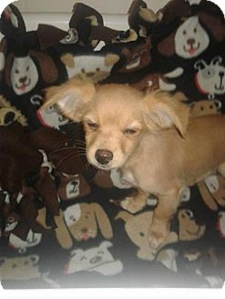 Terrier (Unknown Type, Medium) Mix Puppy for adoption in Goodyear, Arizona - Dory