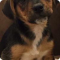 Adopt A Pet :: Barney - Mount Laurel, NJ