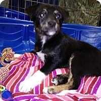 Adopt A Pet :: Fidget Orlando Chapter - Orlando, FL