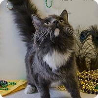 Adopt A Pet :: SAINT - Sandusky, OH