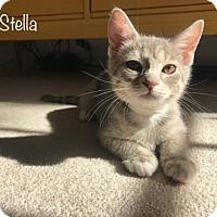 Adopt A Pet :: Stella - Hampton, VA