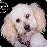 Adopt A Pet :: Toby - Lodi, CA