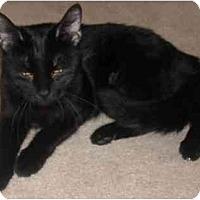 Adopt A Pet :: Gabby - Mesa, AZ
