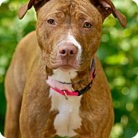 Adopt A Pet :: Charlotte - Pottsville, PA