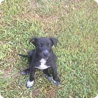 Adopt A Pet :: Grayson - Austin, TX