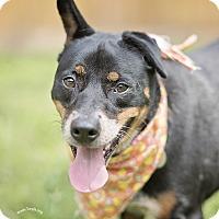 Adopt A Pet :: Mamma Mia - Kingwood, TX