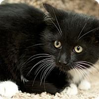 Adopt A Pet :: Monte - Great Falls, MT