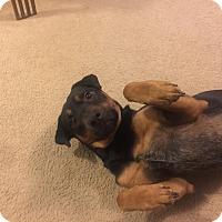 Adopt A Pet :: Casper - Vancouver, WA