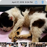 Adopt A Pet :: Rufus - New York, NY