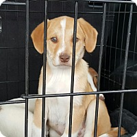 Adopt A Pet :: Rex - Freeport, NY