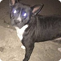 Adopt A Pet :: Dorito - Savannah, GA