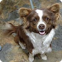 Adopt A Pet :: Eli - Albuquerque, NM