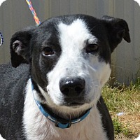 Adopt A Pet :: Wiggles - Jackson, GA