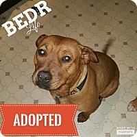 Adopt A Pet :: Abby - Regina, SK