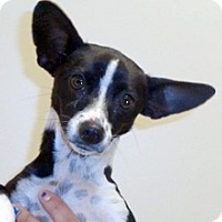 Adopt A Pet :: Lola - Wildomar, CA