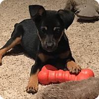 Adopt A Pet :: Daisy - Sagaponack, NY