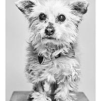 Adopt A Pet :: Stanley - Van Nuys, CA