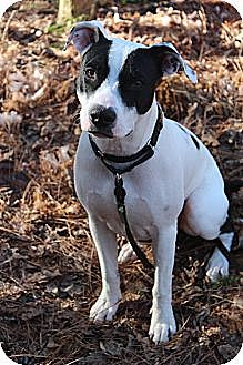 Terrier (Unknown Type, Medium) Mix Dog for adoption in Ellijay, Georgia - Daisy