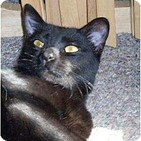 Adopt A Pet :: Yada - Lilburn, GA