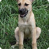 Adopt A Pet :: Harvey - Staunton, VA