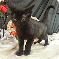 Adopt A Pet :: Baldwin - Clearfield, UT