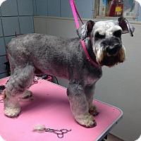 Adopt A Pet :: Oliver - North Little Rock, AR
