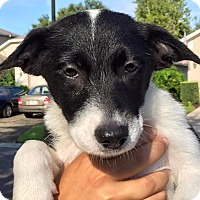 Adopt A Pet :: Ghost#1F - Orlando, FL