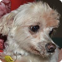 Adopt A Pet :: Lincoln - Prole, IA