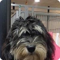 Adopt A Pet :: Farrah - baltimore, MD