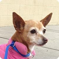 Adopt A Pet :: Hayley - San Marcos, CA