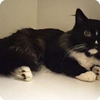 Adopt A Pet :: Charmeuse - Merrifield, VA