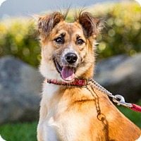 Adopt A Pet :: Anong - San Diego, CA