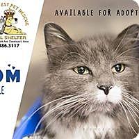 Adopt A Pet :: Tom - Davenport, IA
