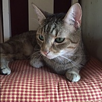 Adopt A Pet :: Wall-E - Ashland, OH