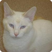 Adopt A Pet :: Sheba - Muscatine, IA