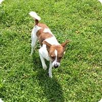 Adopt A Pet :: Bruce - Lumberton, NC