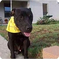 Adopt A Pet :: Maxx in Mineral Wells - Flint (Serving North and East TX), TX