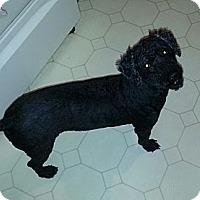 Adopt A Pet :: MAXWELL - Bowie, TX