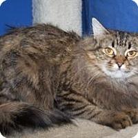 Adopt A Pet :: Sugar Plum - Colorado Springs, CO