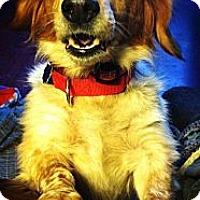 Adopt A Pet :: Doc - Hastings, NY
