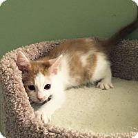 Adopt A Pet :: Mr. Belvedere - Irvine, CA